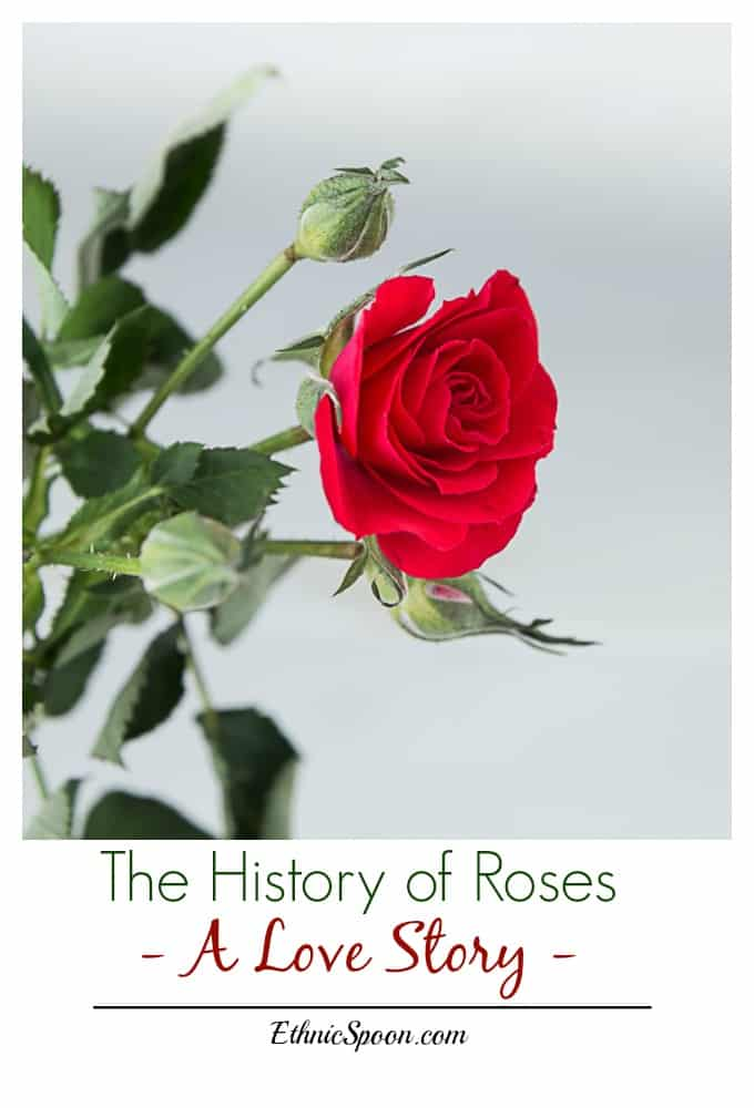 The fascinating history of roses throughout the ages! A love story of sorts with some surprises. Happy Valentines Day! | ethnicspoon.com